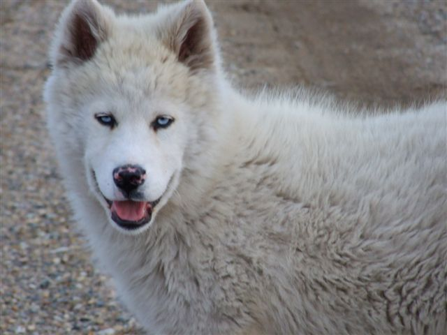 Frequently asked questions about wolves